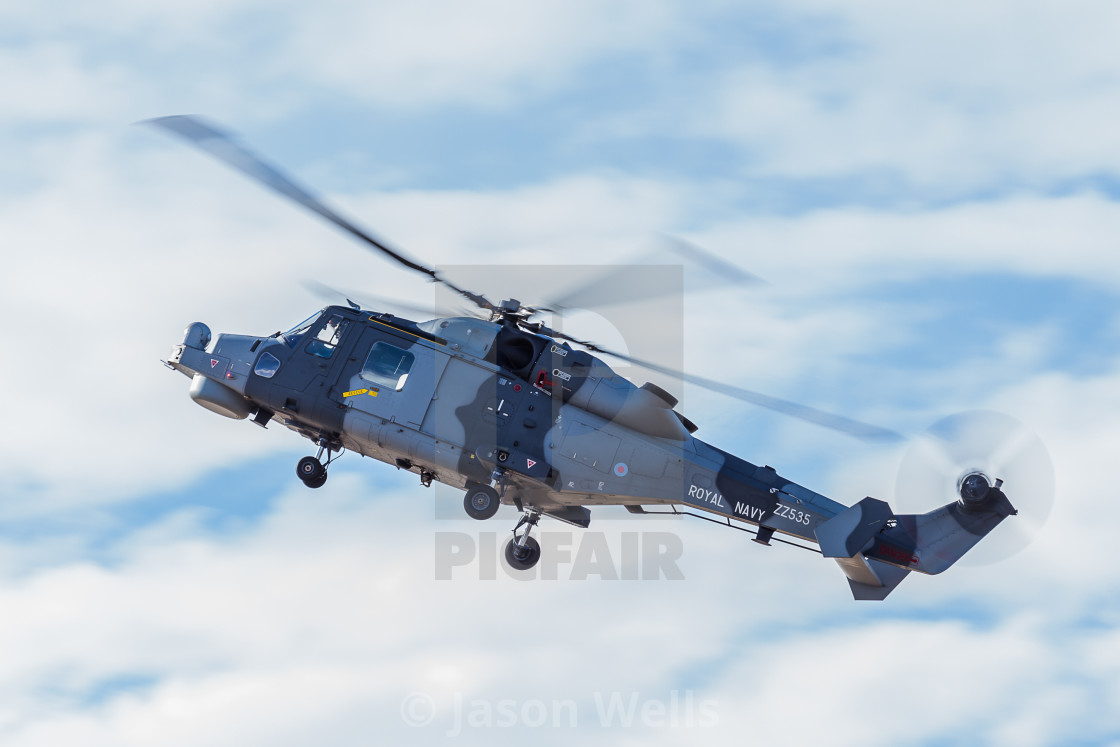 """""""Wildcat in the hover"""" stock image"""
