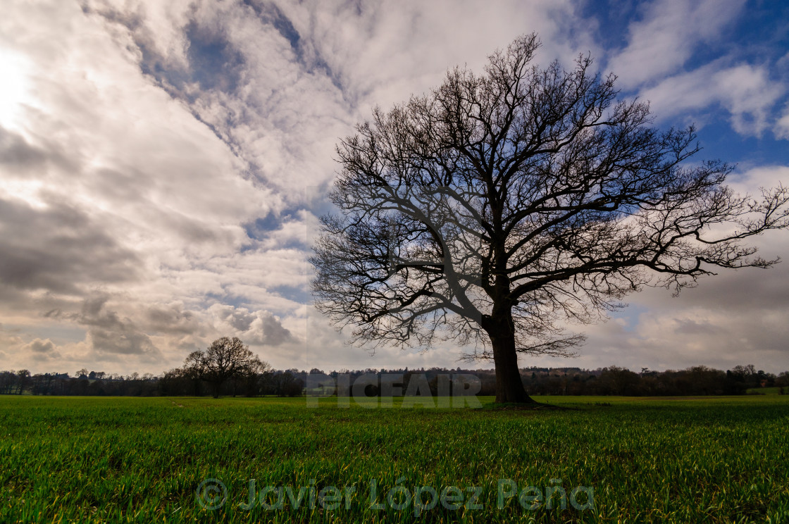 """Lonesome tree"" stock image"