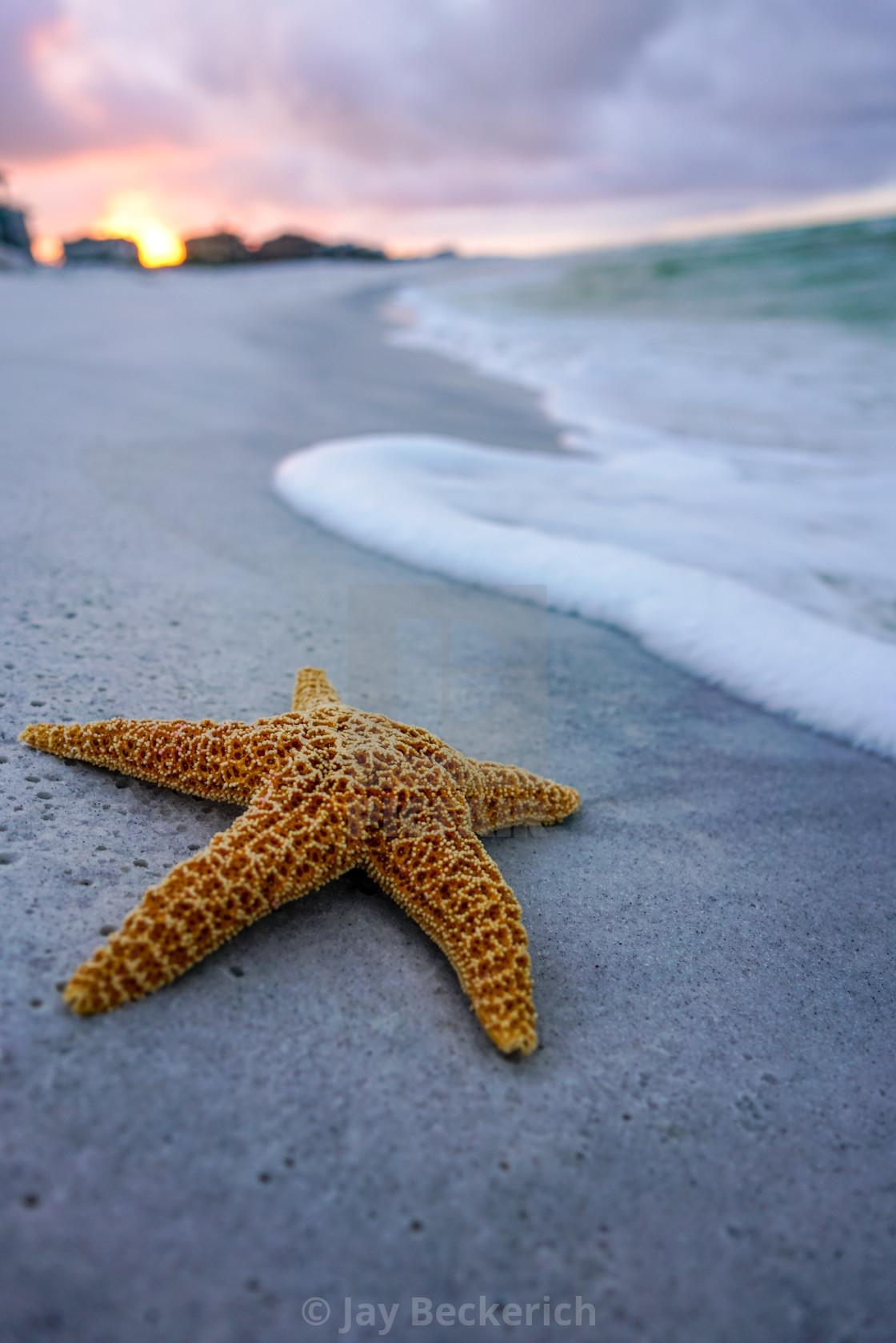 """""""Starfish"""" stock image"""