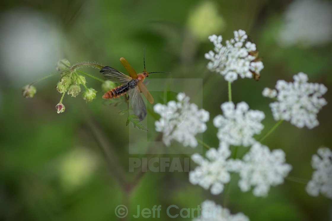 """Insect in Thornton Glen"" stock image"