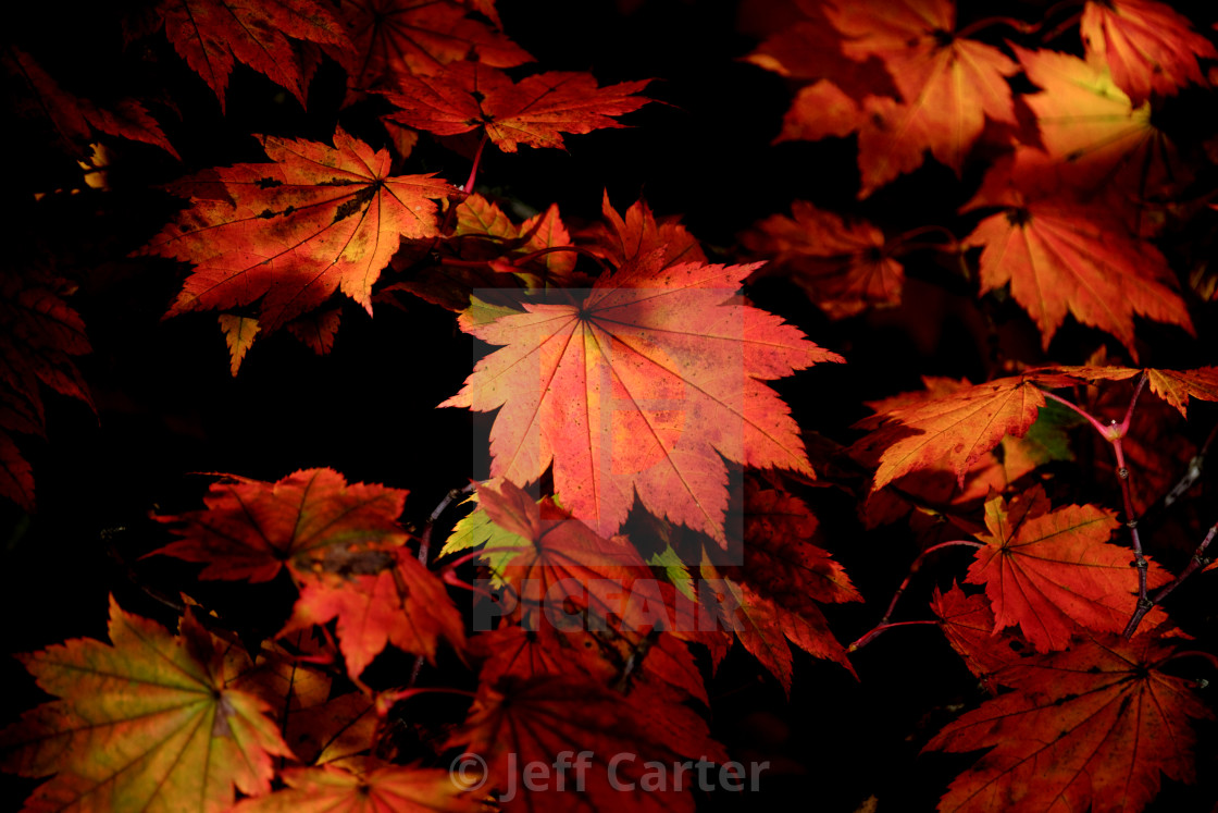 """Autumn Leaves"" stock image"
