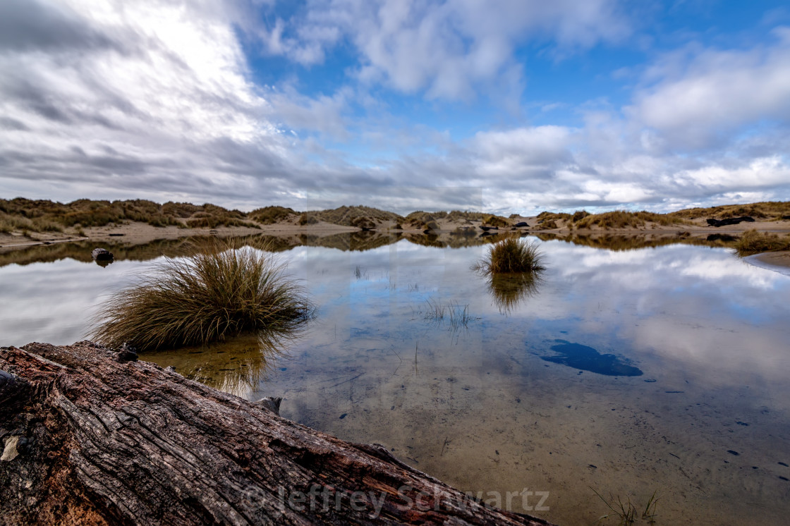 """""""Reflections in a Rainwater Pond, Sand Dunes, Oregon, USA"""" stock image"""