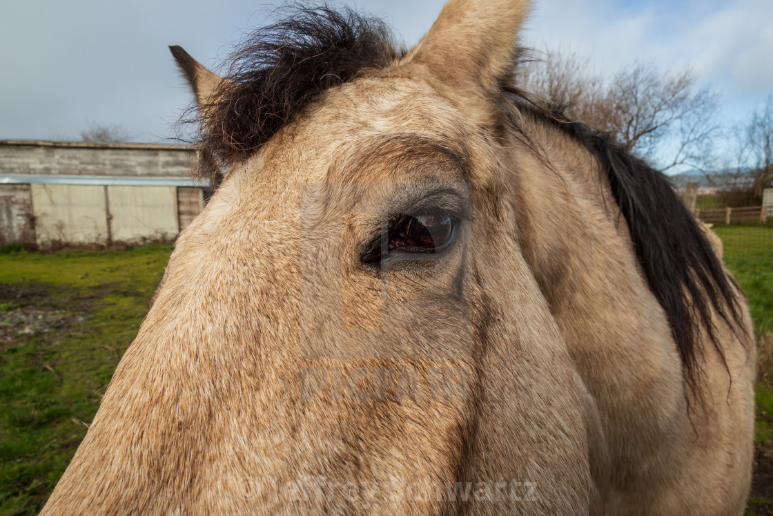 """""""A Friendly Horse at His Barn, Color Image"""" stock image"""