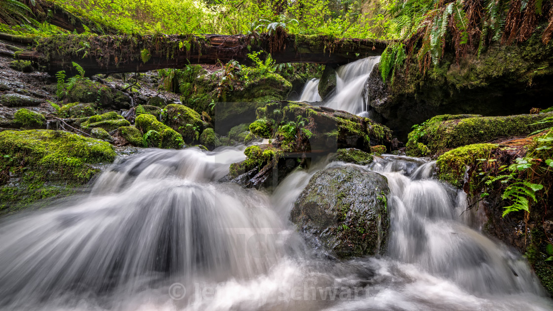 """""""A Small Waterfall in the Rain Forest, Northern California"""" stock image"""