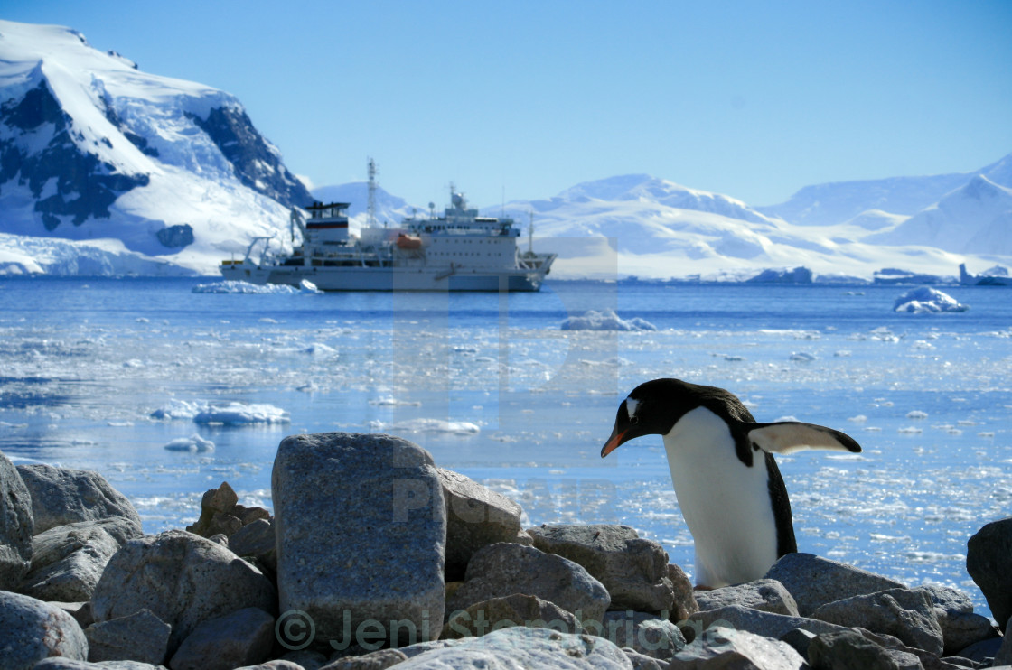 """Gentoo penguin and passenger ship"" stock image"