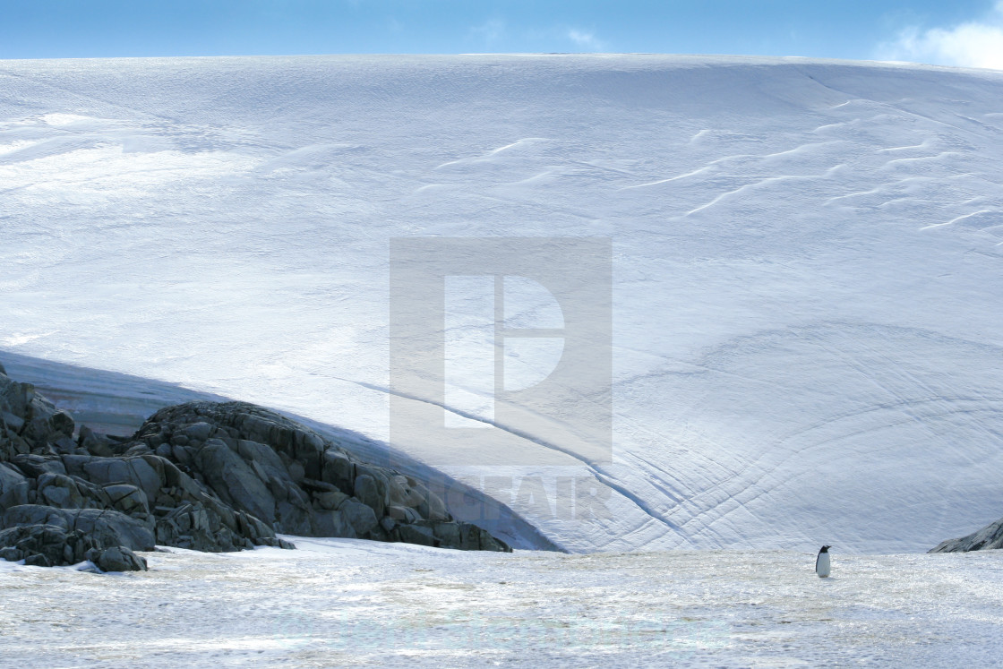 """Lone penguin on ice"" stock image"