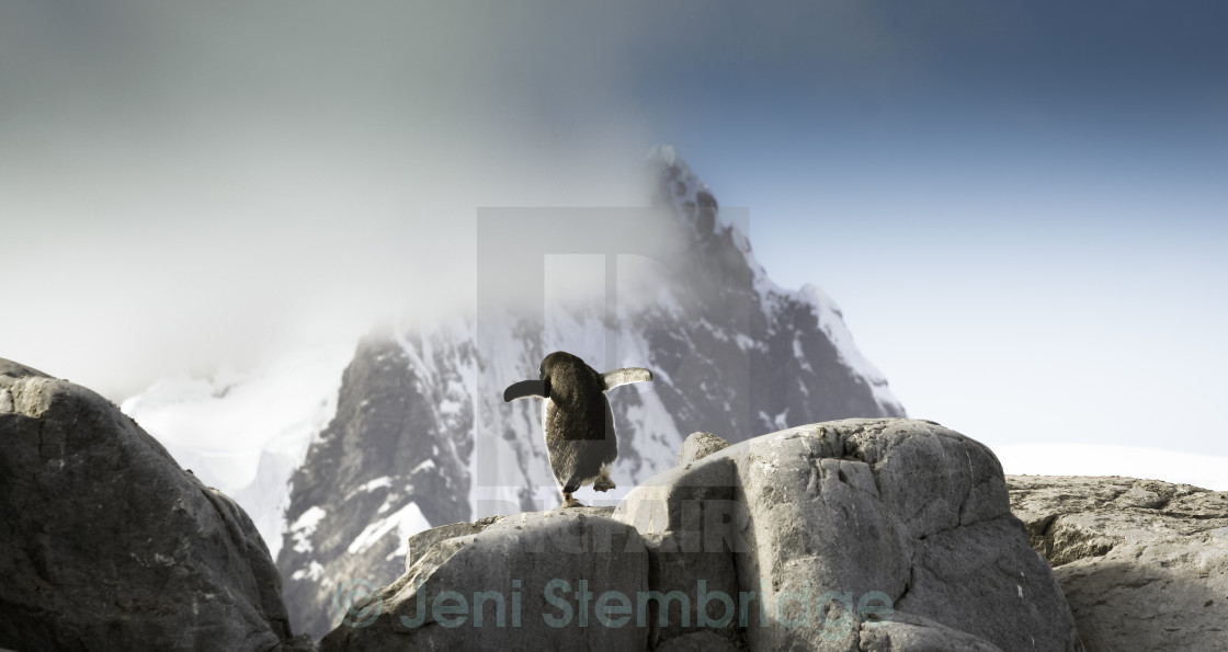 """Penguin on a journey"" stock image"