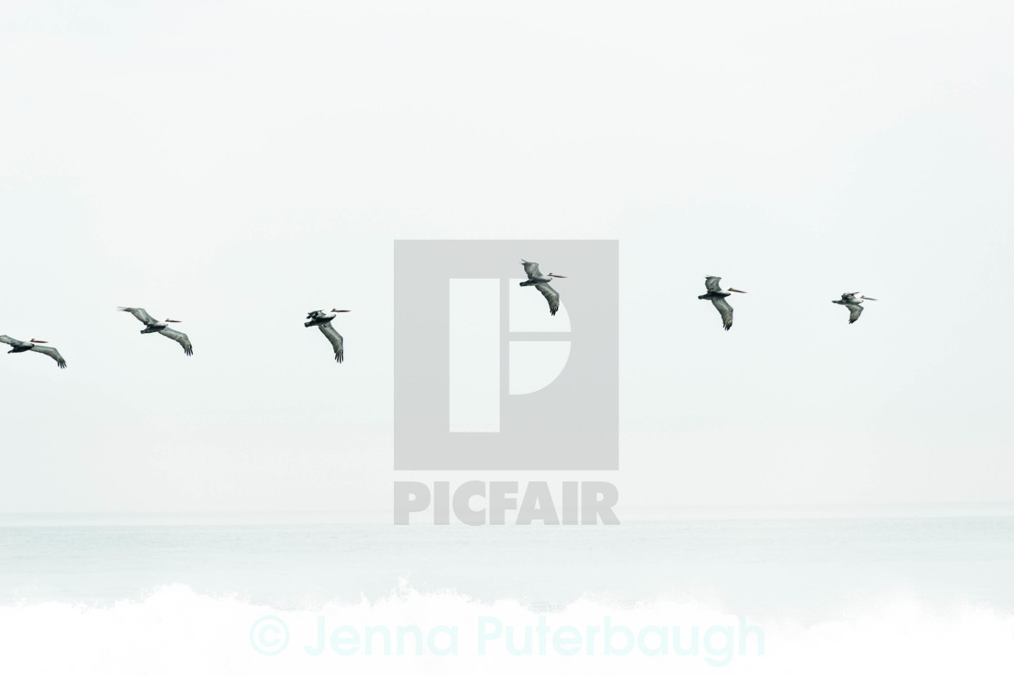 """Birds"" stock image"