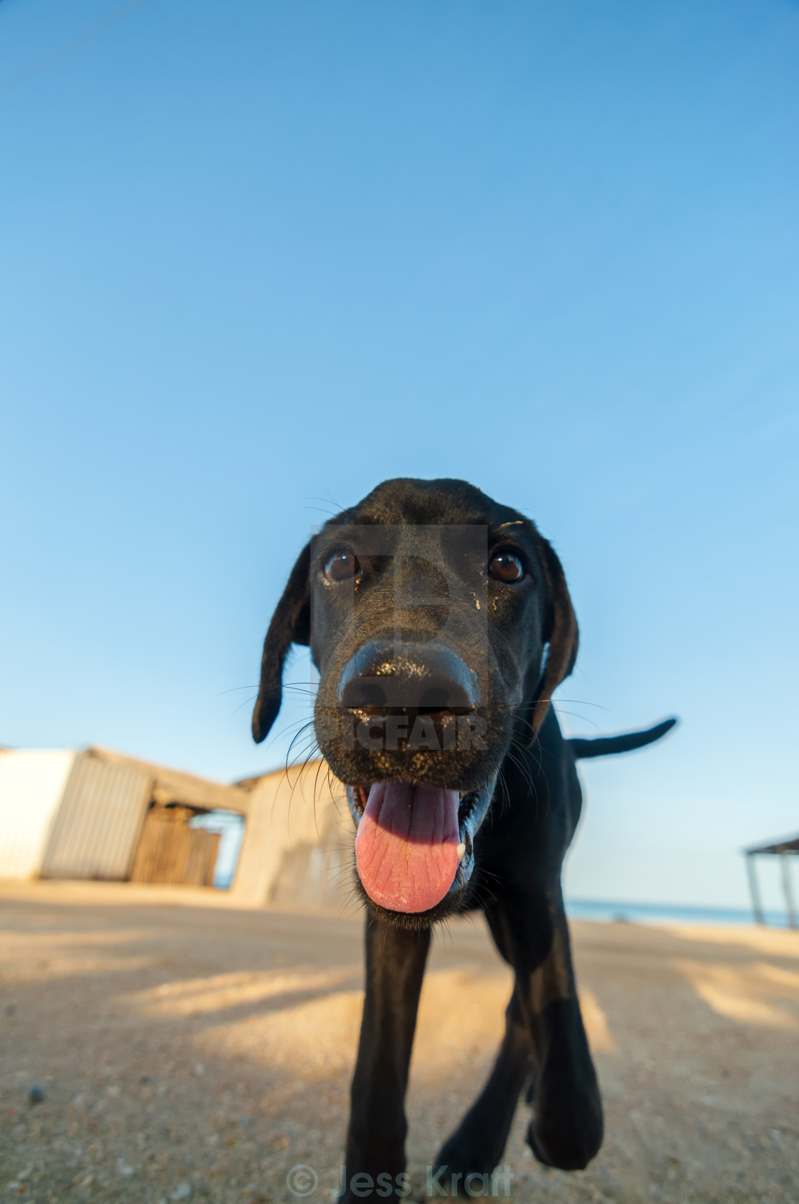 """Playful Dog Closeup"" stock image"