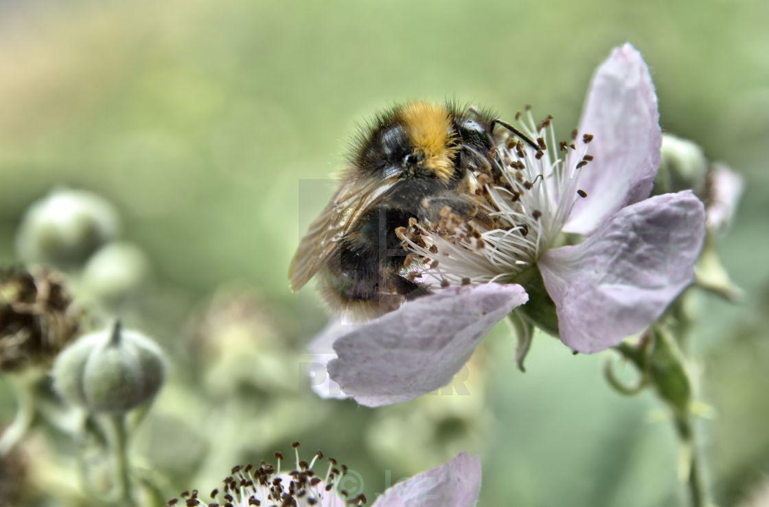 """""""Bee mine"""" stock image"""