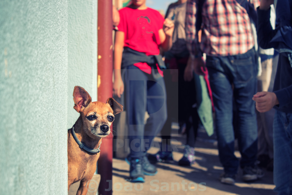 """Cool Little Dog"" stock image"