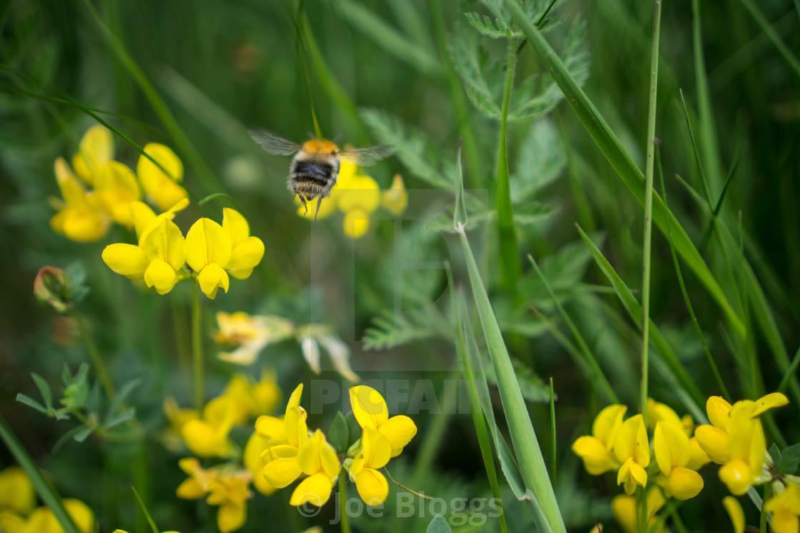 """""""Flying Bee"""" stock image"""