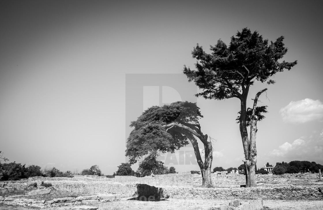 """""""Couple of trees"""" stock image"""
