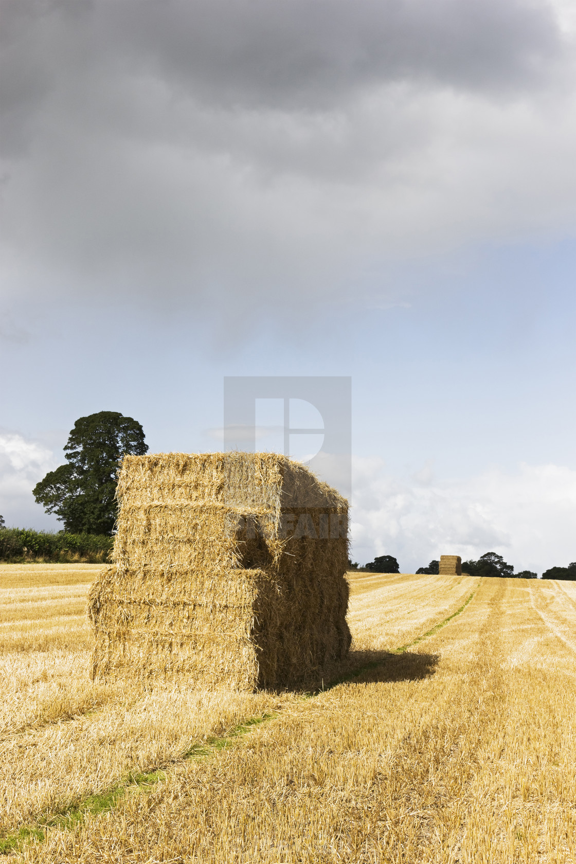 """Hay bales in a freshly harvested field with copy space"" stock image"