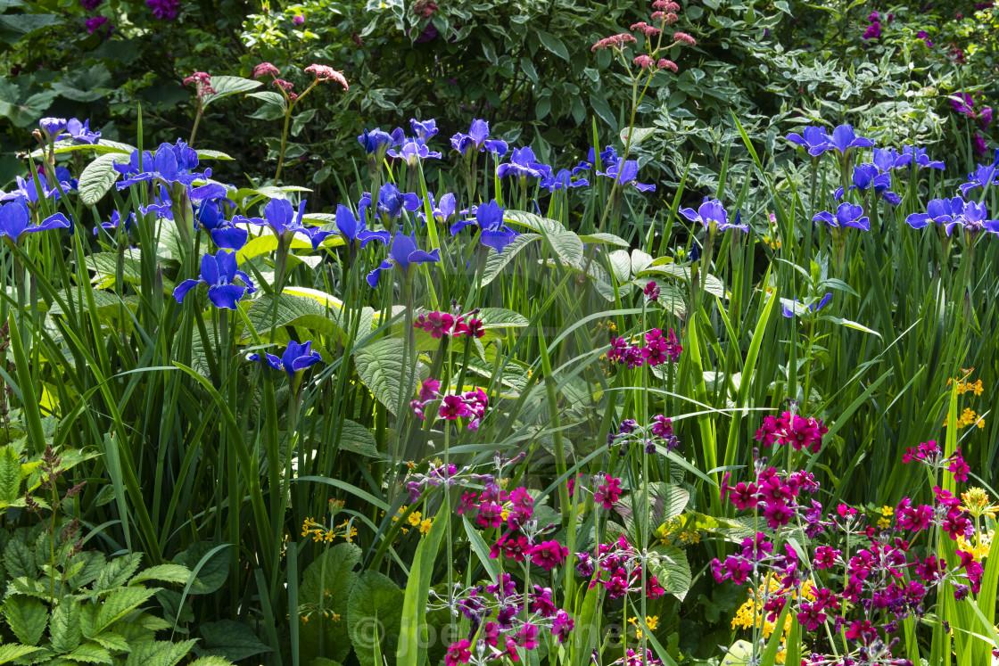 """Water Gardens with Irises"" stock image"