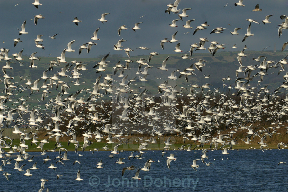 """Flock of Seagulls"" stock image"