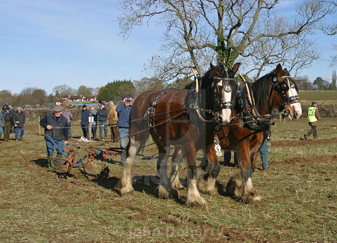 """Horse Drawn Plough"" stock image"