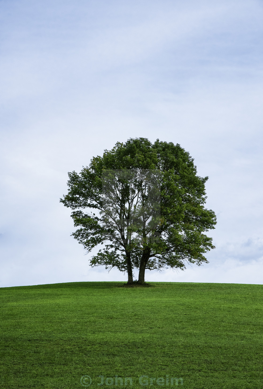 """""""Lone tree on a hill, Stroud Preserve, Pennsylvania, USA"""" stock image"""