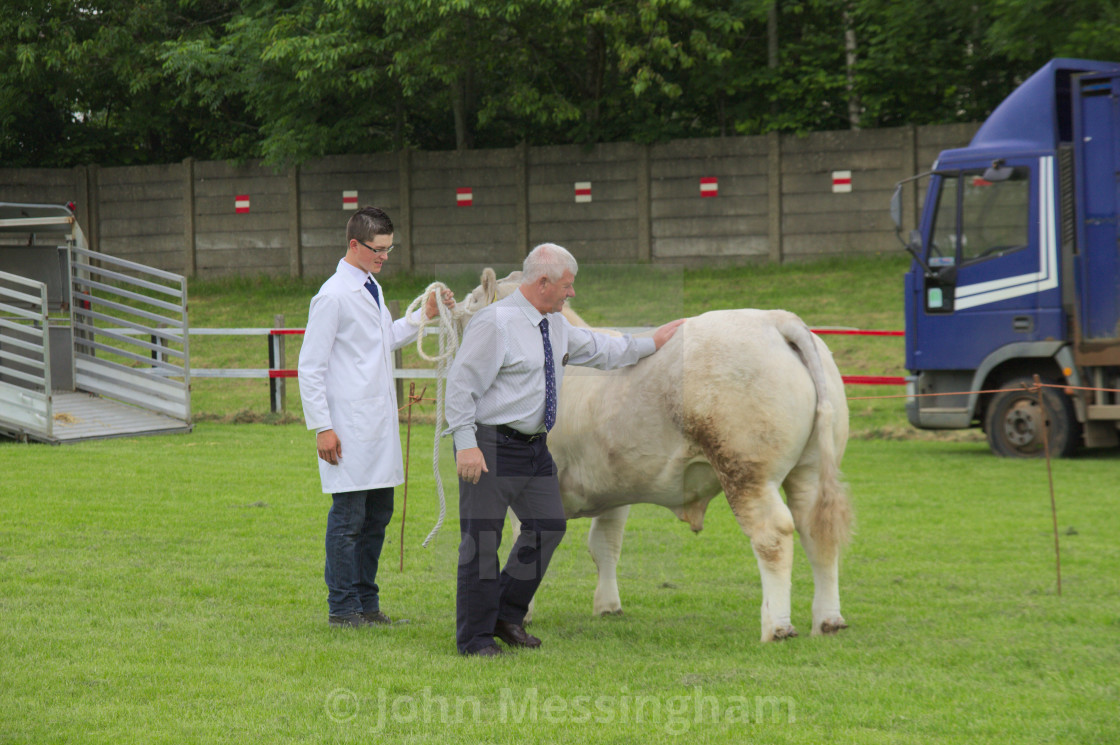 """East Kilbride Open Cattle show 2014"" stock image"