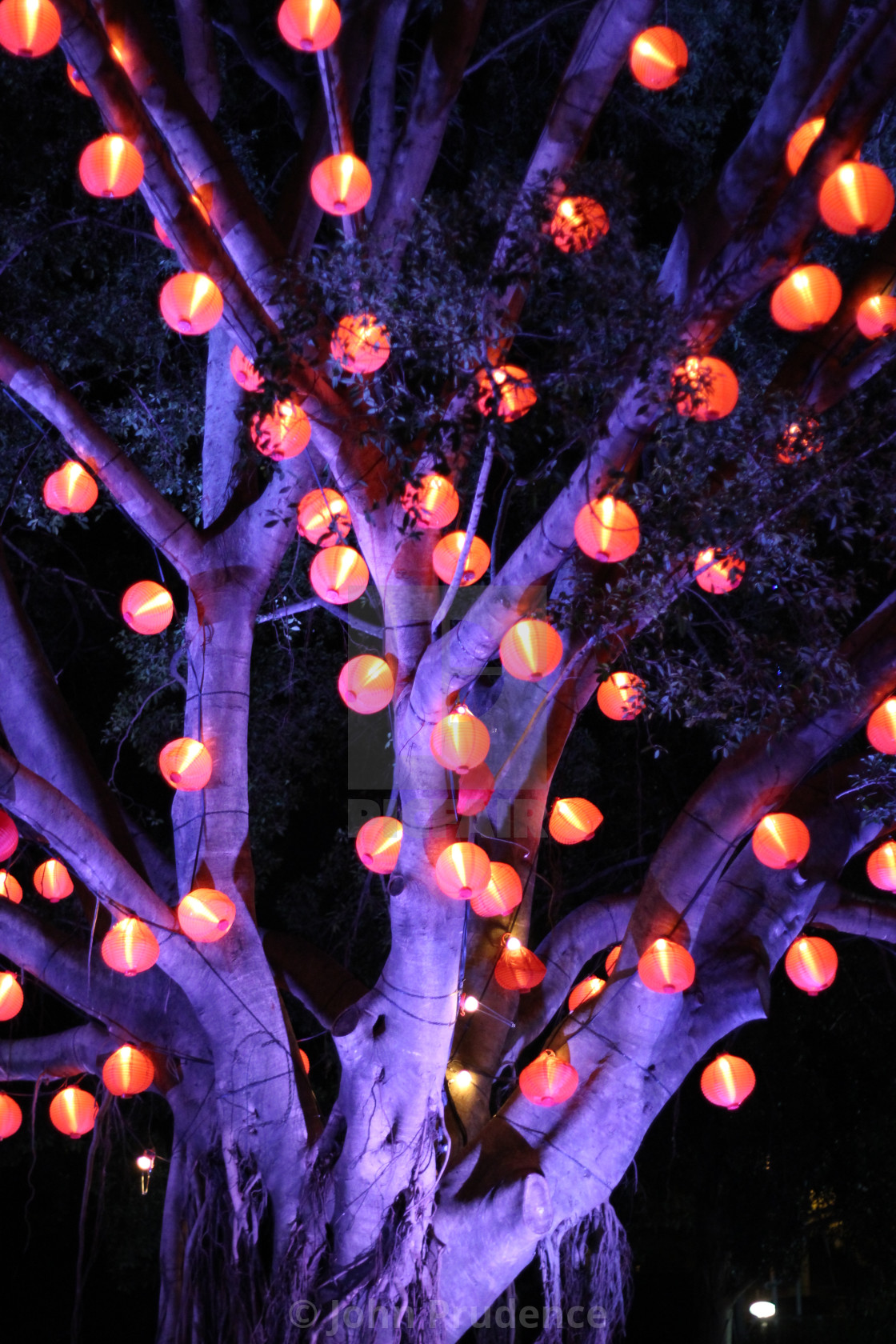 Tree Of Lanterns License Download Or Print For 12 40 Photos Picfair