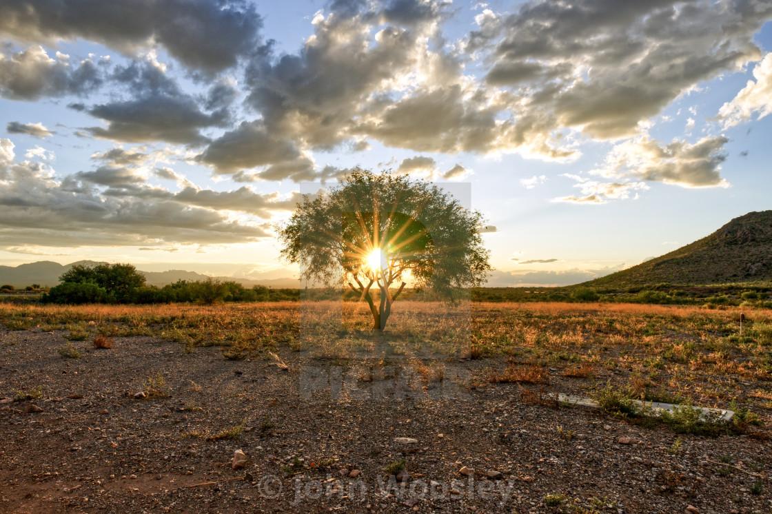 """Sun rays through a tree"" stock image"