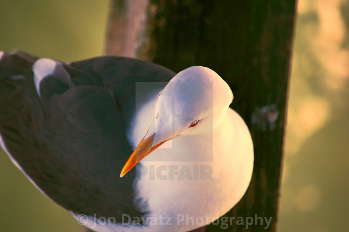 """""""The Seagull"""" stock image"""