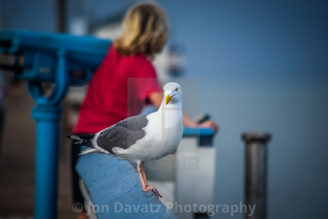 """""""Seagull and Boy"""" stock image"""