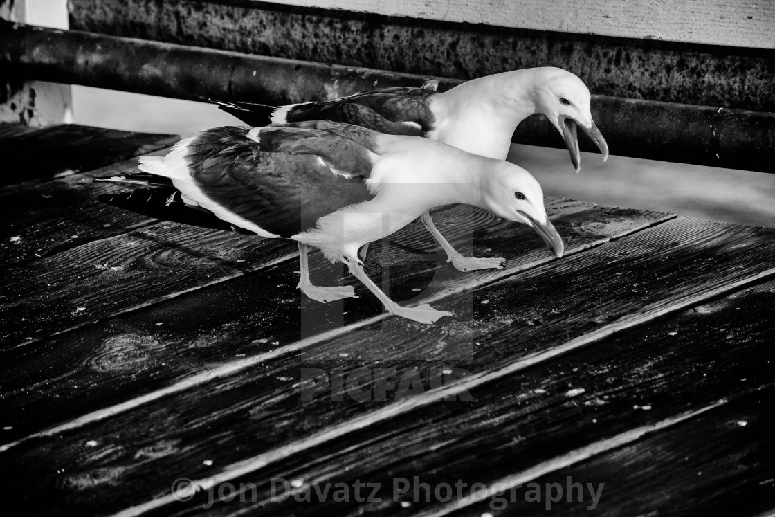 """""""Seagulls on a pier"""" stock image"""