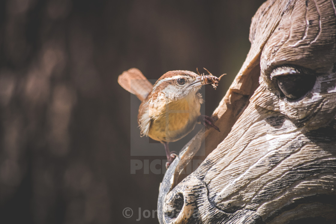 """Feeding time for wrens"" stock image"