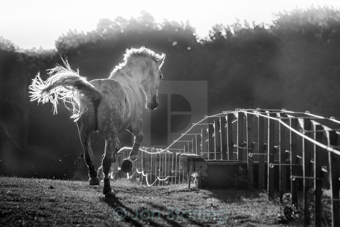 """Horse and Fence"" stock image"