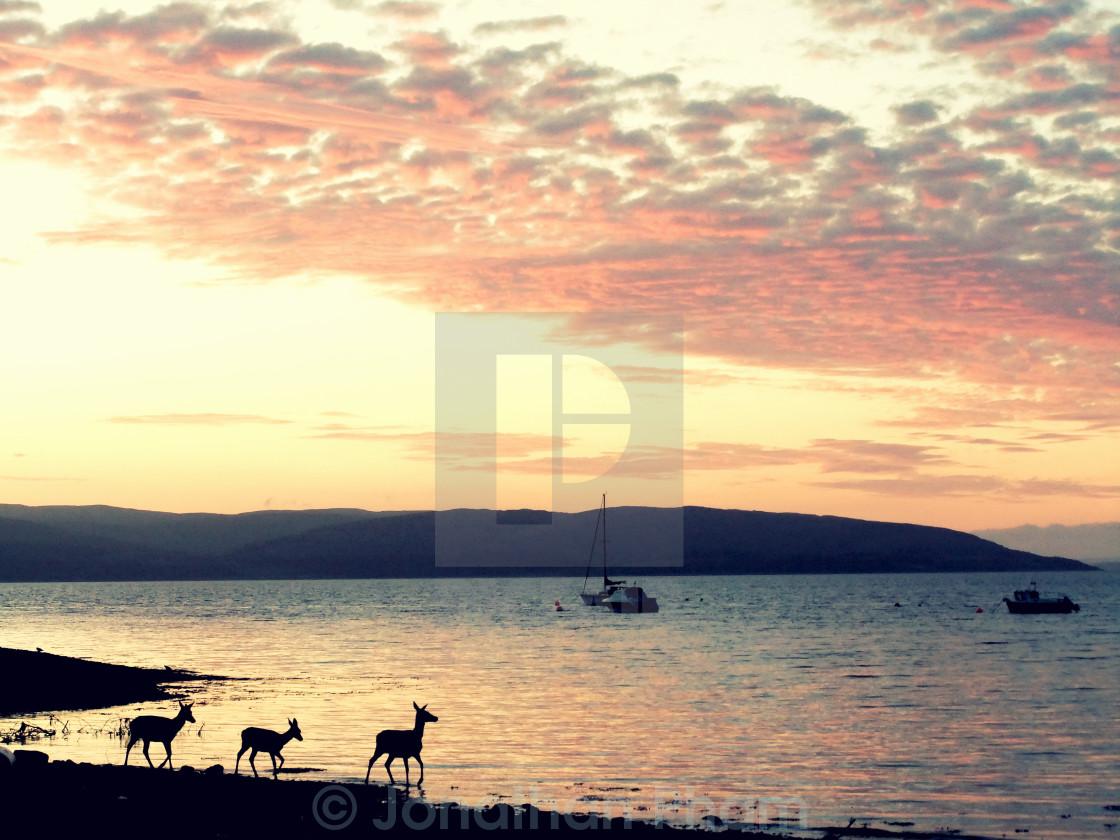 """REUPLOAD - Three deer at sunset"" stock image"