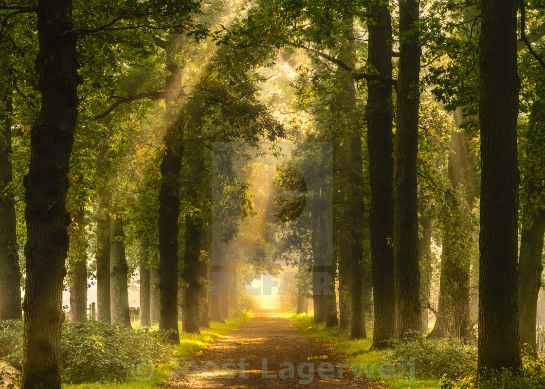 """Sunny forest path"" stock image"