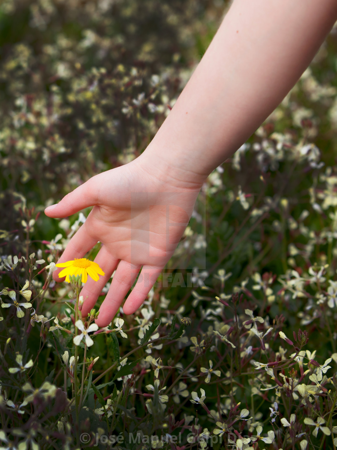Woman Hand Caressing A Beautiful Flower License For 124 On Picfair