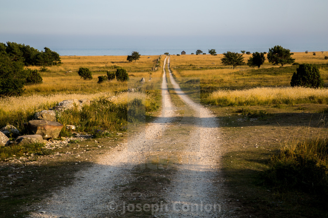 """Dirt Track leading through a Meadow to Sea in Gotland, Sweden"" stock image"
