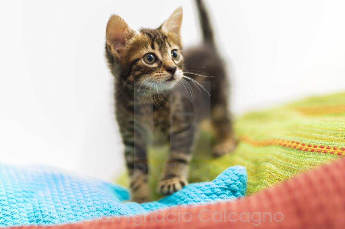 """""""Kitten in colours"""" stock image"""