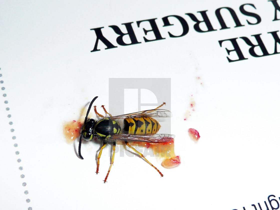 """Wasp"" stock image"