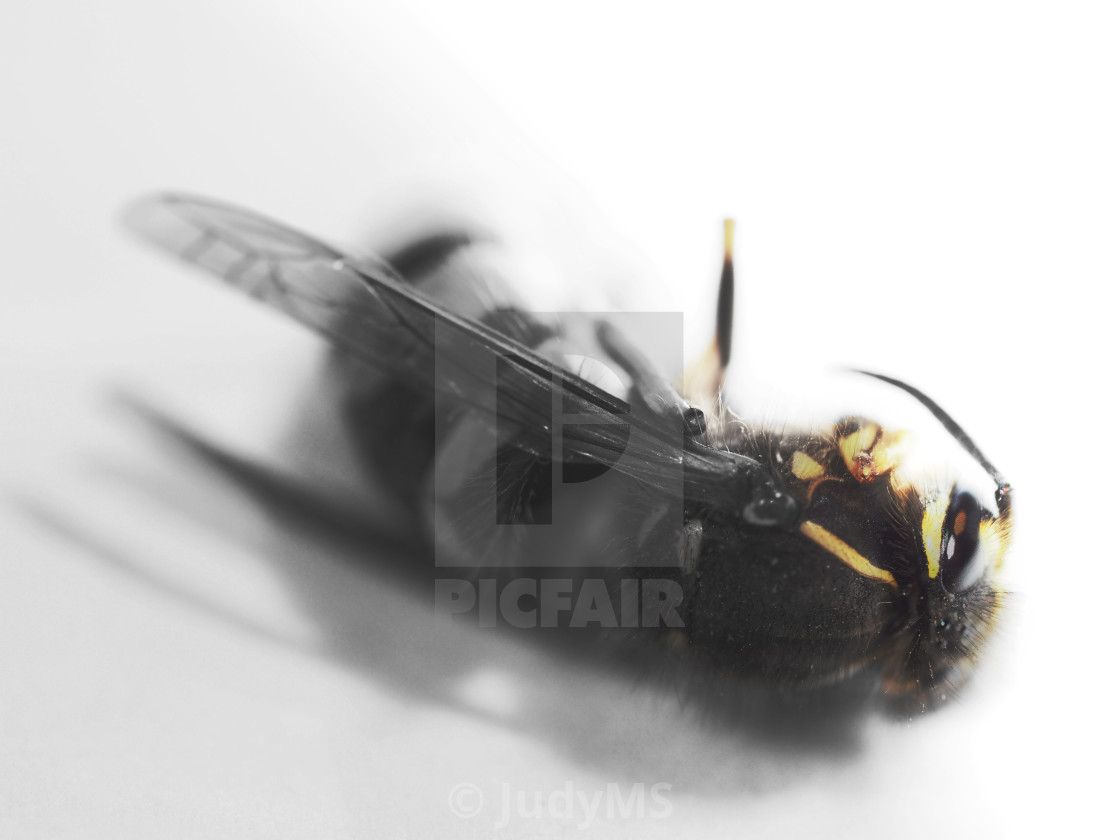 """""""Death Of A Queen"""" stock image"""