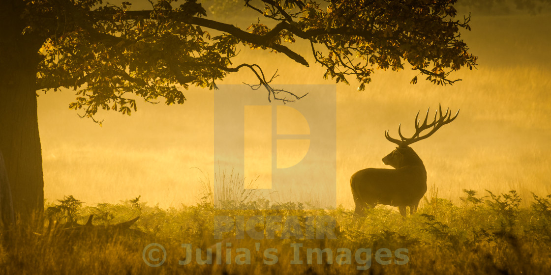 """Red Deer silhouetted against the early morning sun"" stock image"