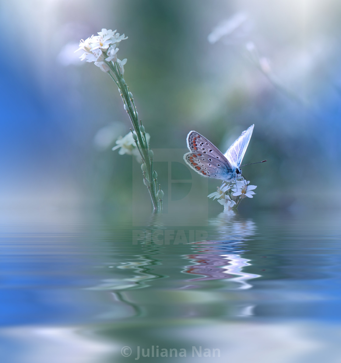 Blue Magic Butterfly Over Water And Wildflowers Unique