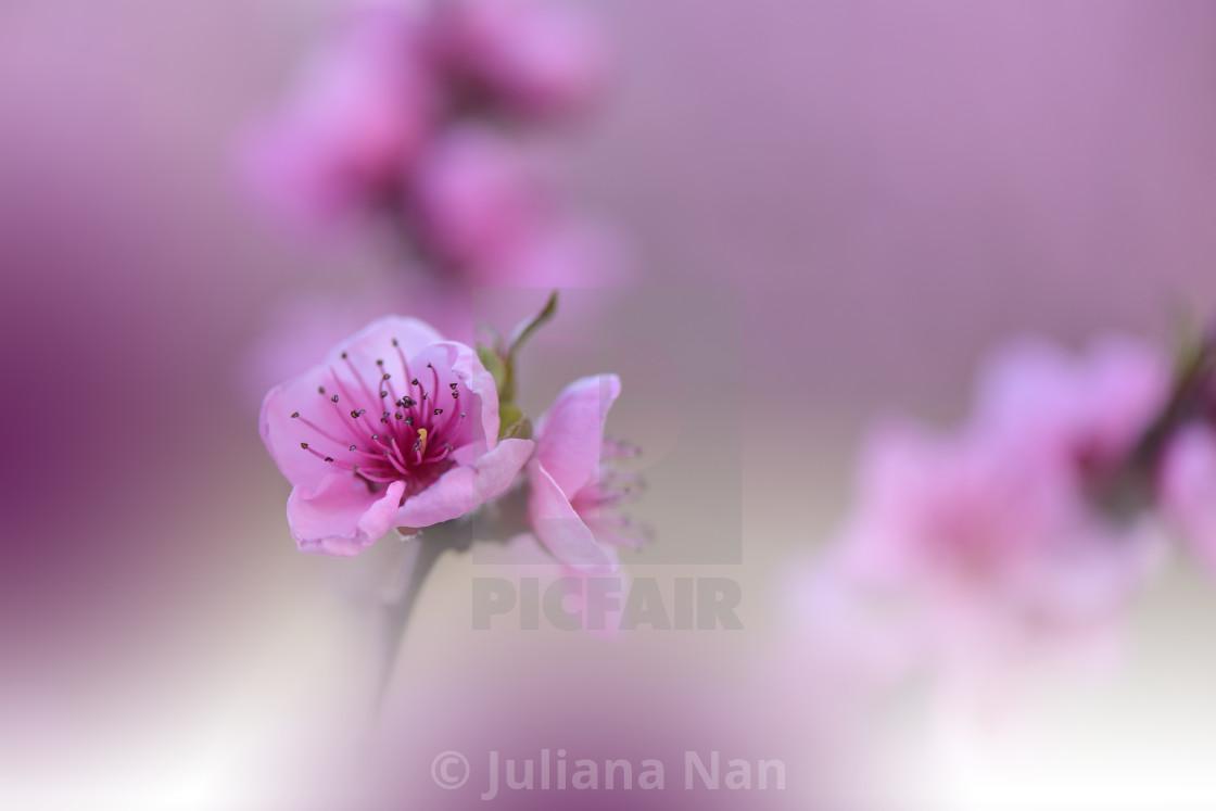 Beautiful Nature Background Amazing Spring Flowers