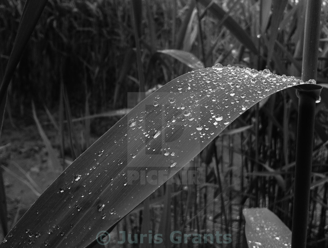"""Raindrops"" stock image"