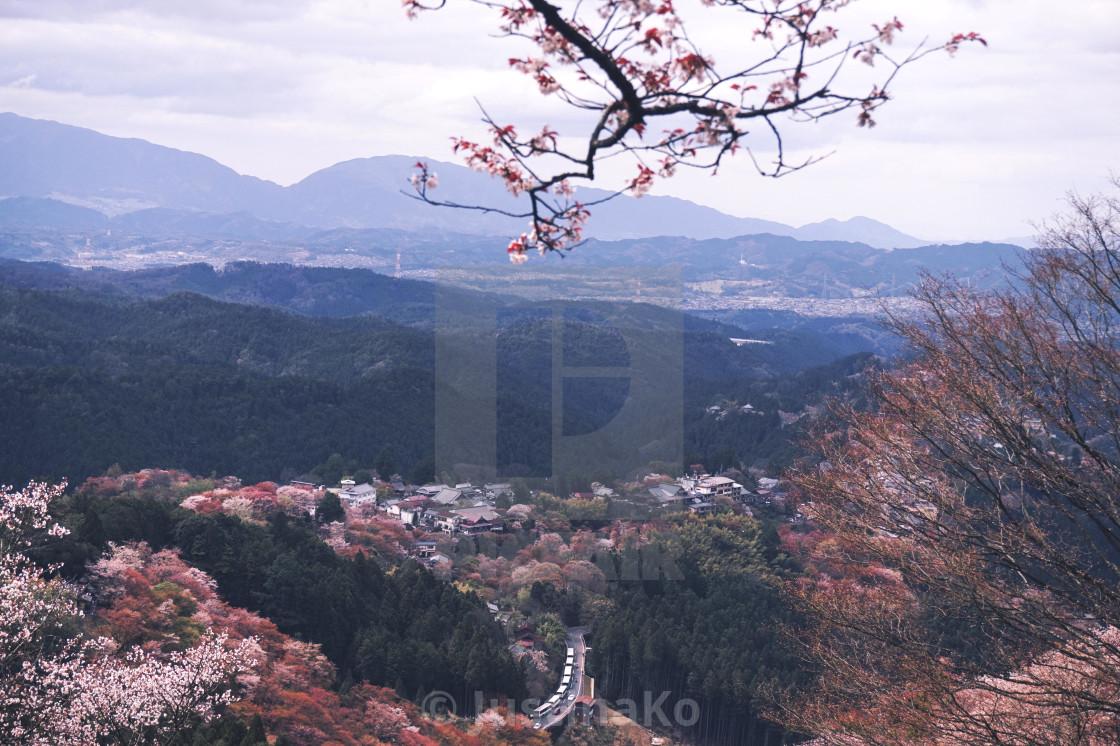 """""""Cherry Blossom in Yoshino, Nara"""" stock image"""