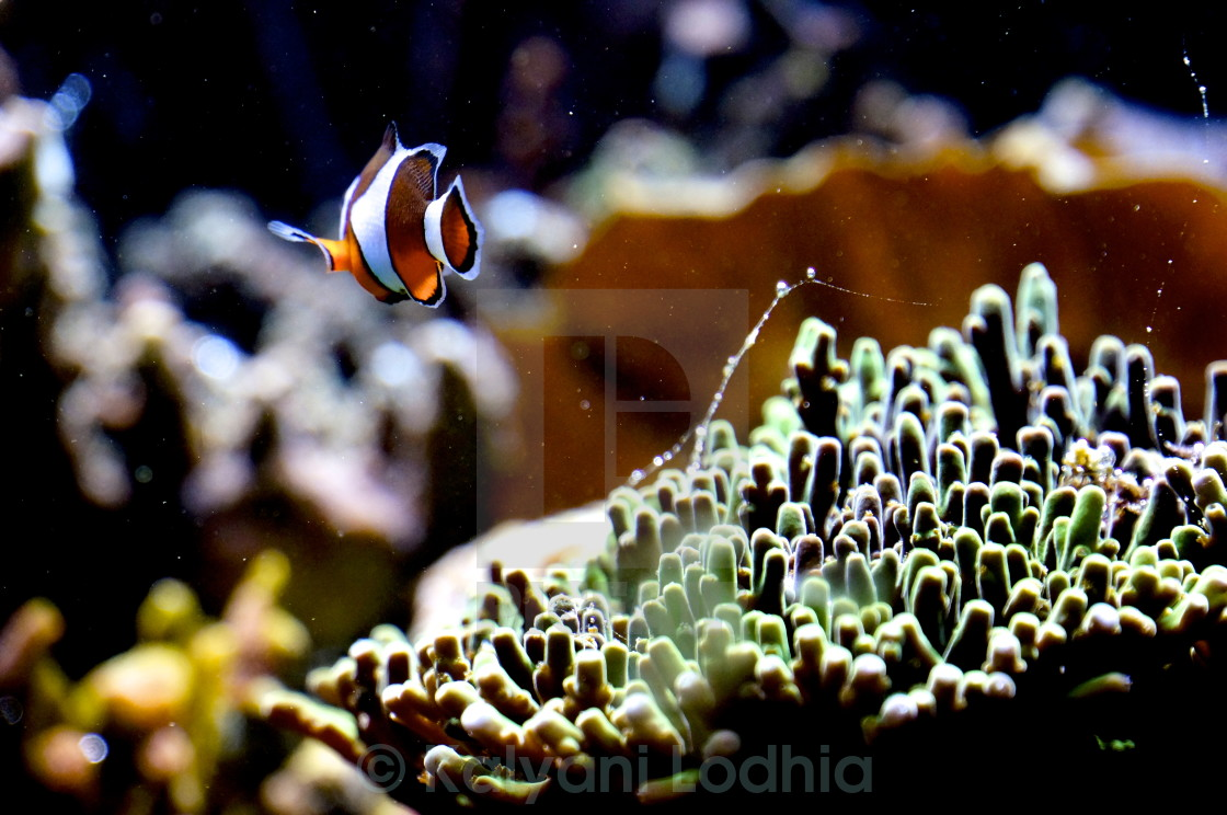 """Finding Nemo"" stock image"