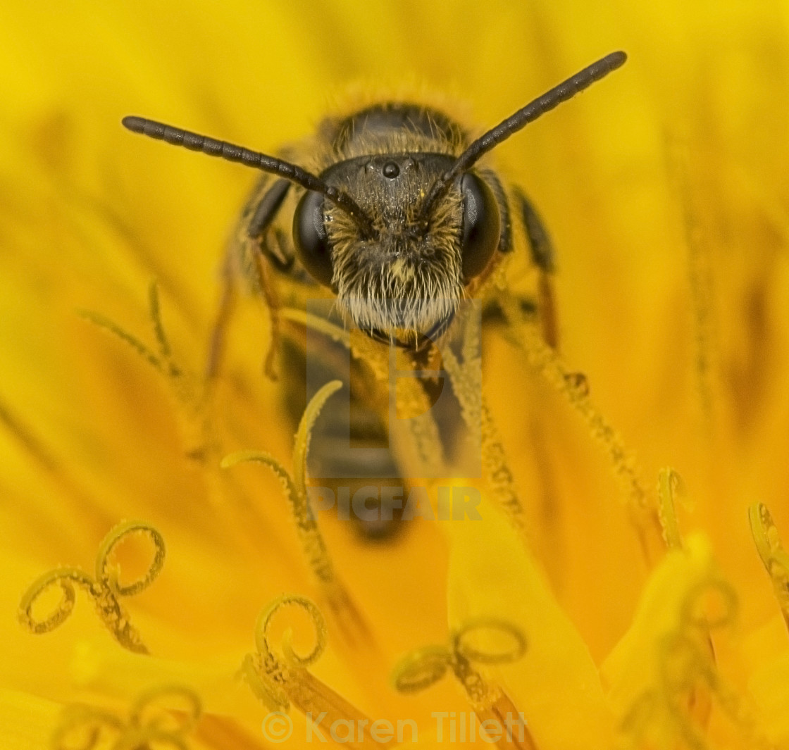 """You Looking At Bee?"" stock image"