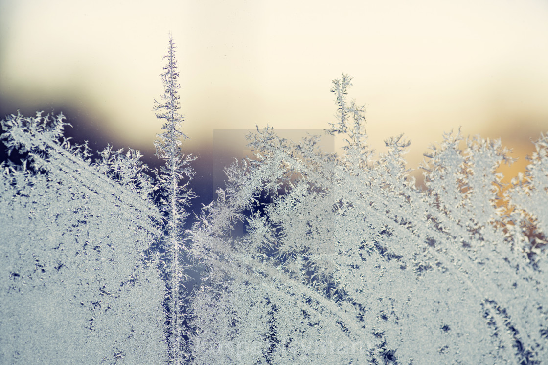 """""""Morning frost on a window in the sunrise"""" stock image"""