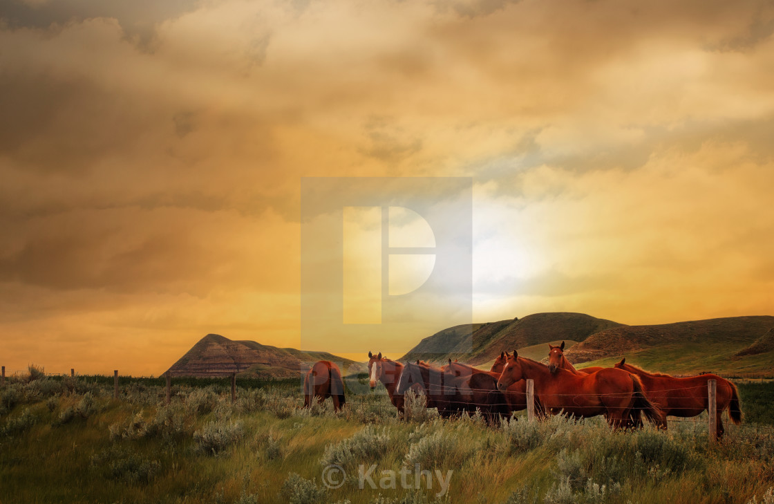 """Herd of horses at sunset"" stock image"