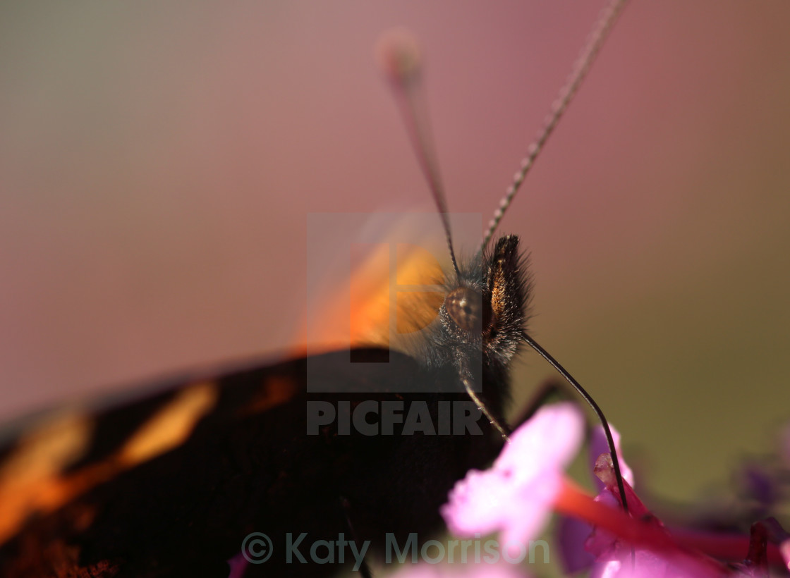 """""""Drunk Butterfly"""" stock image"""
