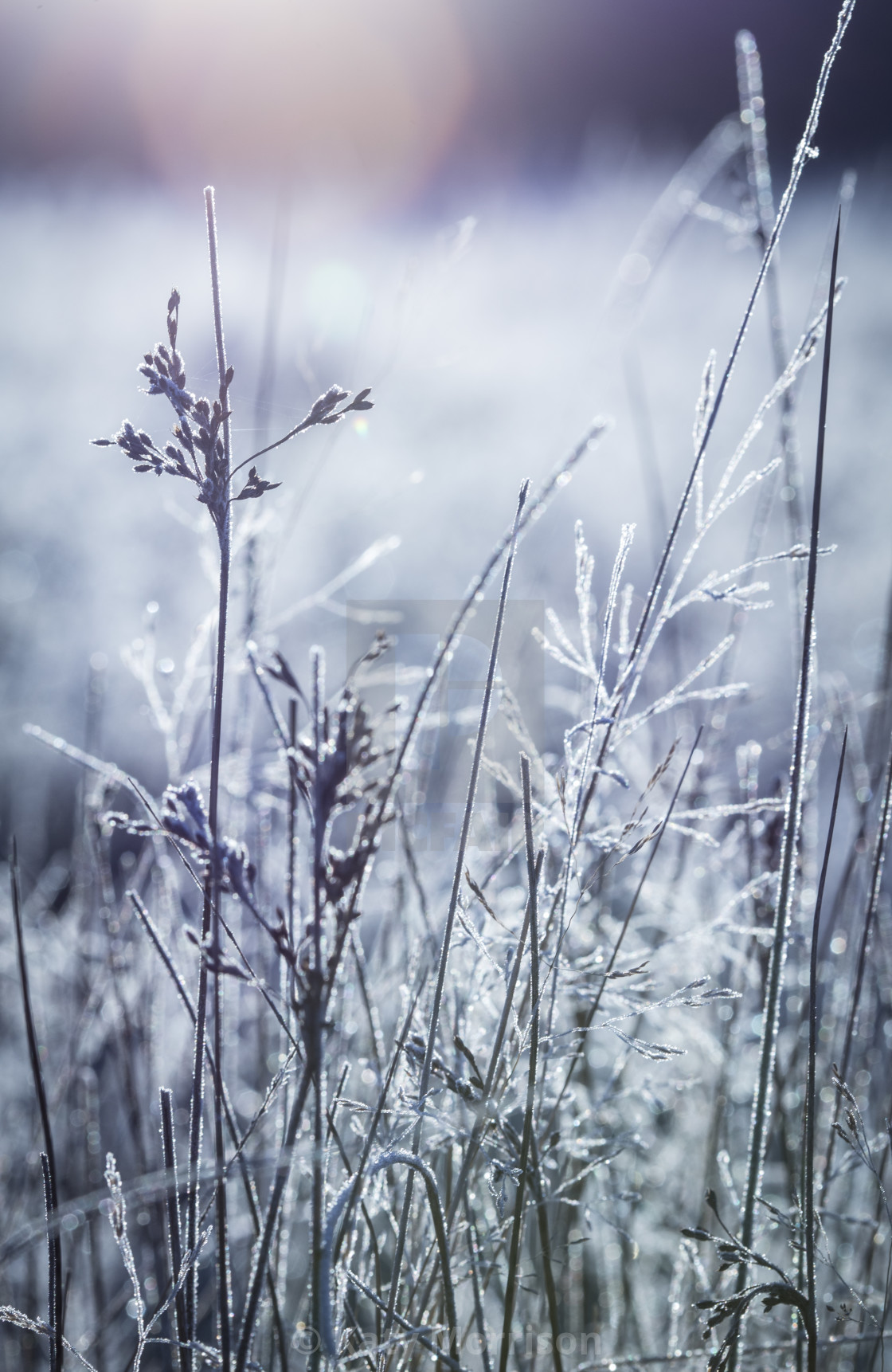 """Frosty Field"" stock image"