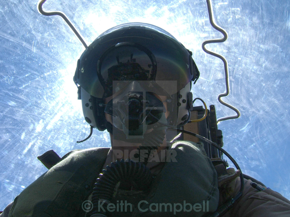 """Harrier Selfie"" stock image"