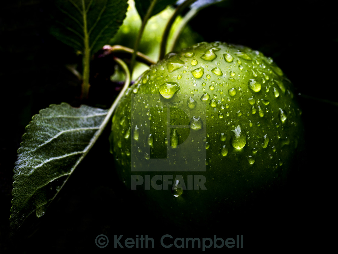 """After the Rain"" stock image"